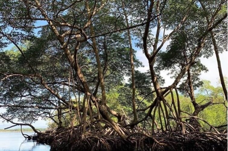 Tras críticas por foto de playa dominicana con basura, Vogue publica paisajes dominicanos