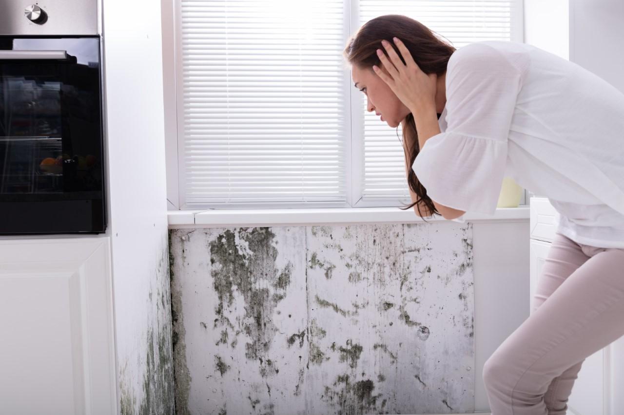 4 señales de exceso de humedad en casa