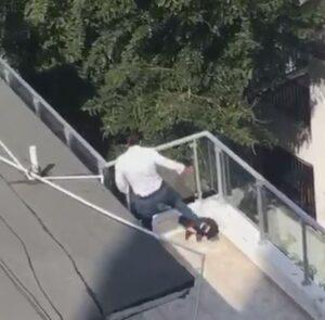 Hombre que maltrata a un perro en un video será dispuesto a la justicia